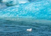 Glacier — Foto Stock