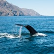 Humpback whale fin — Stock Photo