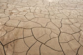 Cracked ground — Stock Photo