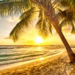 Barbados — Stock Photo #40676095
