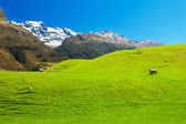 New Zealand mountains — Stock Photo