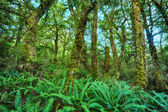New Zealand Rainforest — Stock Photo
