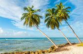 Barbados — Foto de Stock