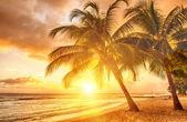 Barbados — Stock Photo