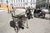 Horses and carriage — Stock Photo