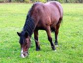 Horse grass — Stock Photo