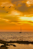 Sailboat leaving at dusk with some seagulls in foreground — Stock Photo