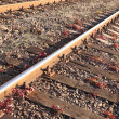 Stock Photo: Rail Road Tracks - outdoor