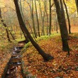 Autumn, leafs in autumn forest, Poland, Europe — Stock Photo