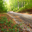 rural autumn scenery - fall in forest - park road — Stock Photo