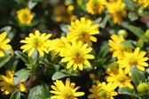 Close-up of yellow flowers — Stock Photo