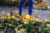 Man raking yellow leaves — Stock Photo