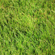 Beautiful green lawns perfectly cut background — Stock Photo #19201743
