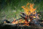 Fogueira fogueira fogo verão floresta natureza fogo — Fotografia Stock