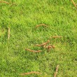Beautiful green lawns perfectly cut background — Stock Photo #19722939