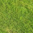 Beautiful green lawns perfectly cut background — Stock Photo #19848265