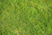 Beautiful green lawns perfectly cut background — Stock Photo