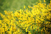 Yellow flower close up at day summer — Stock Photo