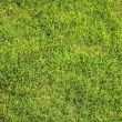 Beautiful green lawns perfectly cut background — Stock Photo #21654297