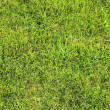 Beautiful green lawns perfectly cut background — Stock Photo #22347053