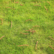 Beautiful green lawns perfectly cut background — Stock Photo #22599405
