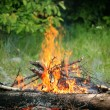 Bonfire campfire fire summer forest nature fire - Stock Photo