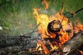 Bonfire campfire fire summer forest nature fire — Stock Photo