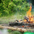 Royalty-Free Stock Photo: Bonfire campfire fire summer forest nature fire