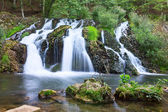 Beautiful waterfall in the forest — Stock Photo