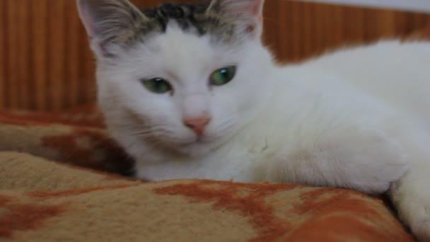 Gato en cama — Vídeo de stock