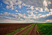 Dirt road and wheat of field — Stock Photo