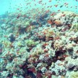Underwater shoal — Stock Video #13329910