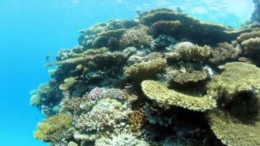 Underwater scene — Stock Video