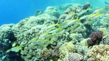 Shoal of fish — Stock Video
