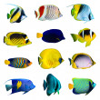 Tropical fish collection — Stock Photo #18570073