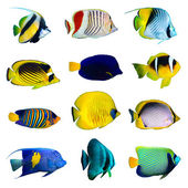 Tropical fish collection — 图库照片