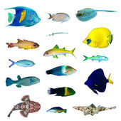 Collection de poissons tropicaux — Photo