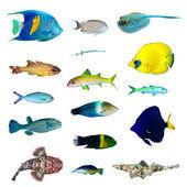 热带鱼类集合 — 图库照片