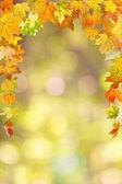 Autumn foliage — Foto de Stock