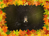 Autumn spider — Stock Photo