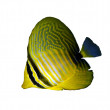 Stock Photo: Desjardin's sailfin tang
