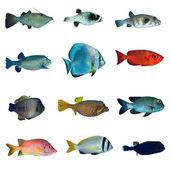 Kolekcja tropikalna ryba — Zdjęcie stockowe