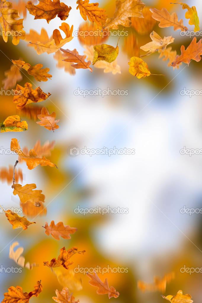 橡树叶子树叶 — 图库照片08sserg