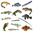 Black Sea fish collection — Stock Photo