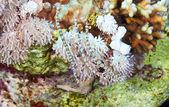 Network pipefish — Stock Photo