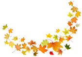 Maple leaves falling — Stock Vector