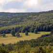 Forest meadow — Stockfoto