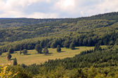 Forest meadow — Stock Photo