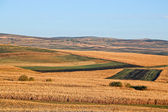 Fields of gold — Stock Photo