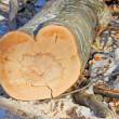 Heart-shaped trunk — Stock Photo #18573333